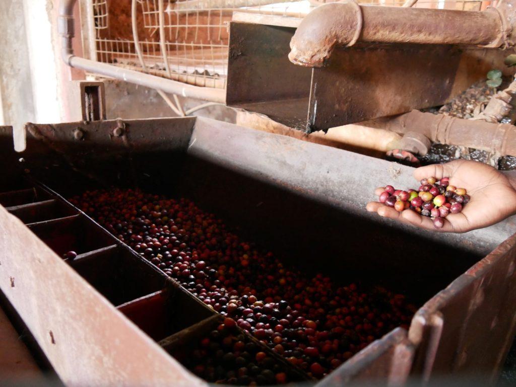 Kaffeeplantage