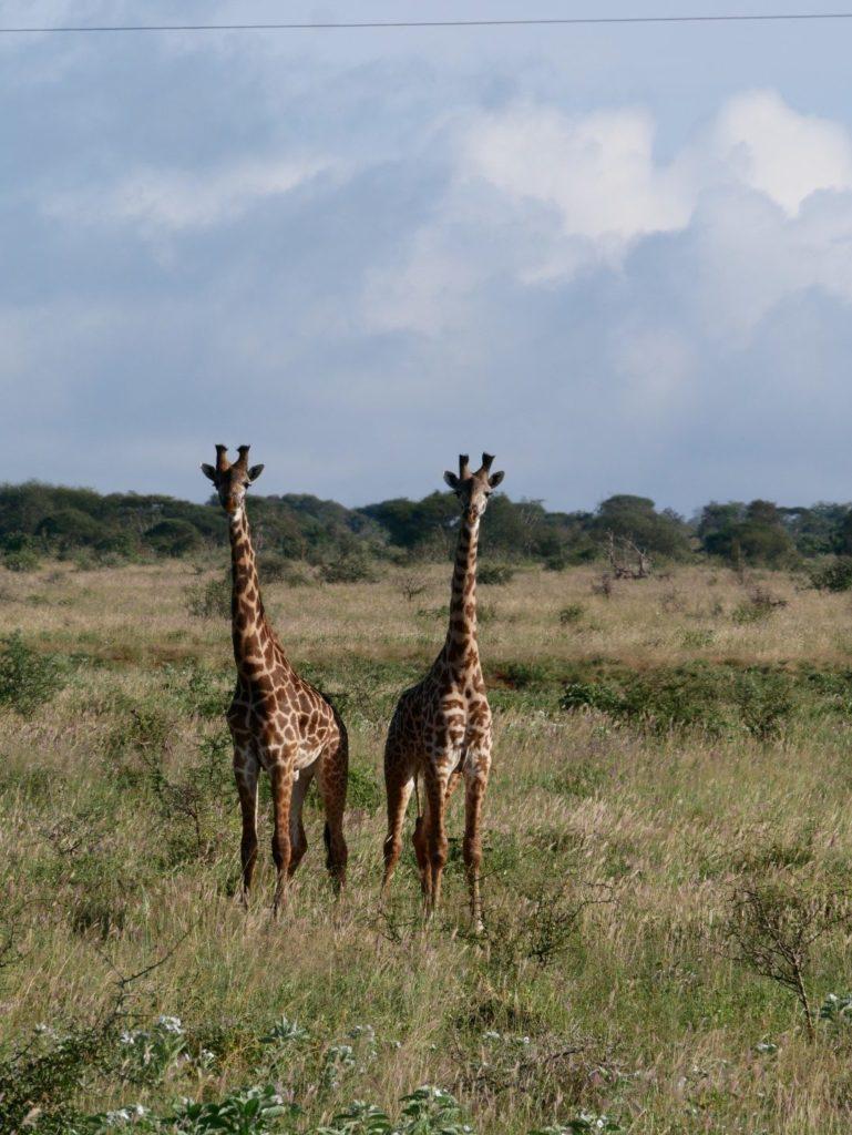Tsavo West National Park