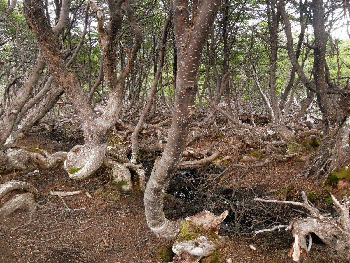 Cerro Guanaco Trail